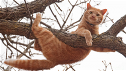 Cat in Trouble up a Tree : Hope in Hopeless Situations