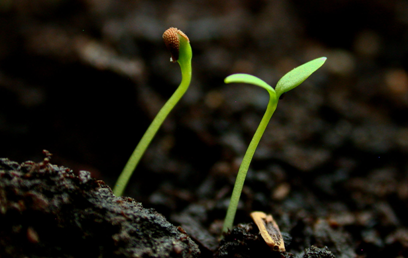 The Promise of New Life in Christ: A Seedling